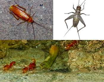 Home or office we eliminate bugs, spiders, roaches, ants, scorpions, rodents and more!
